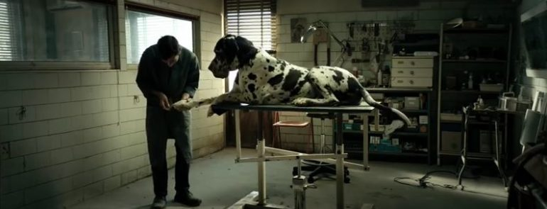 "Foto: ""Dogman"" Official Trailer"